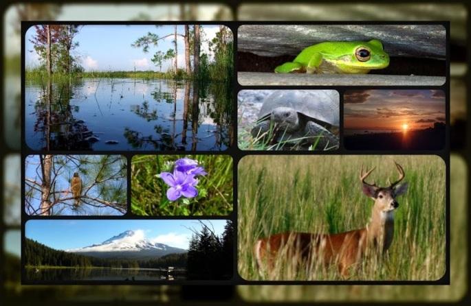 2013 Nature collage