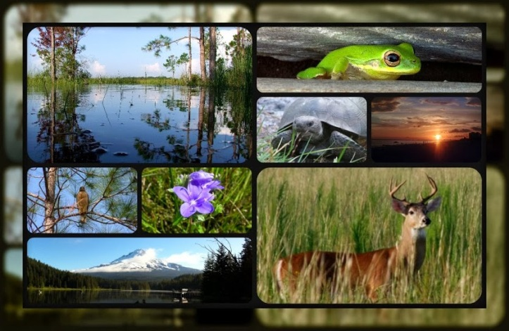 2013 Nature collage