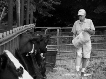 dad cows