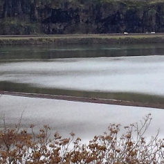 Bald Eagles on Gravel Spit in Columbia River