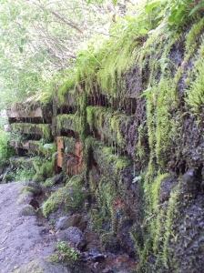 Mossy trail edge