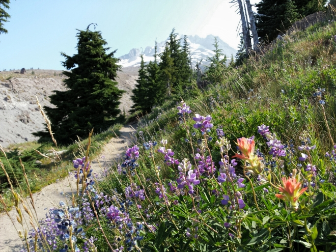 Flowers along Timberline Trail