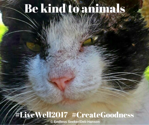 day-40-be-kind-to-animals
