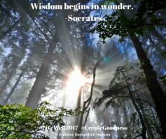 Day 130 wisdom begins in wonder