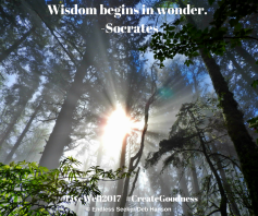Day 130 wisdom begins in wonder