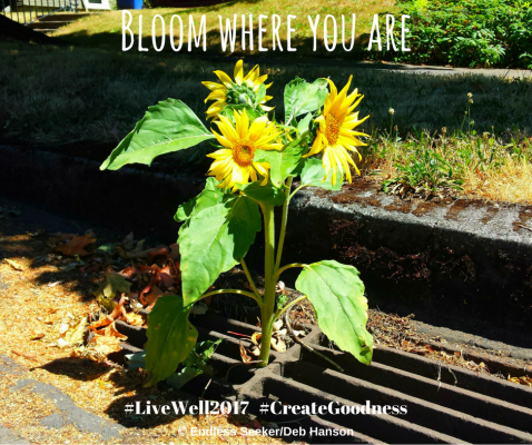 Day 198 bloom where you are