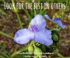Day 207 Look for the best in others